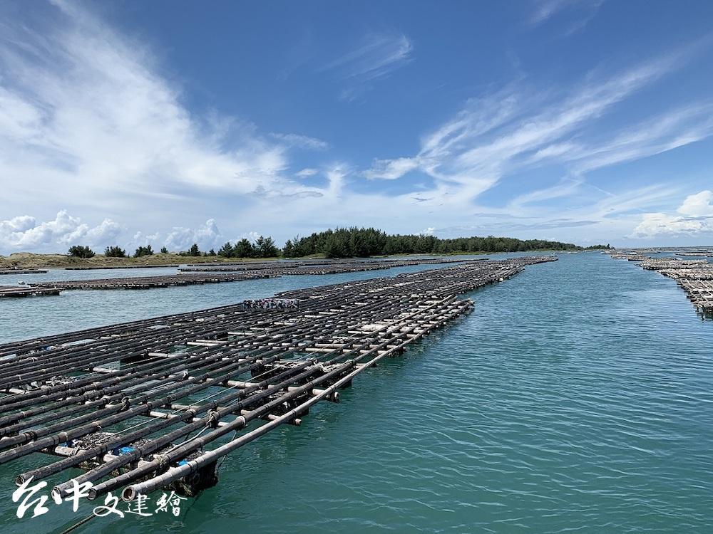 台江內海可以養蚵。(圖:慈心基金會)