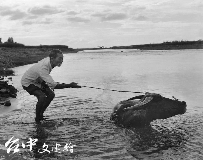 陳耿彬攝影作品「老牛」(圖:台中市文化局)