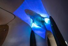 Photo of 座頭鯨游進台中歌劇院 世界首見 5 萬流明4K投影 19 公尺曲牆